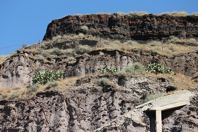 Cacti Santorini PDM 18-07-2015 07-43-12