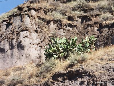 Cacti Santorini PDM 18-07-2015 06-48-009