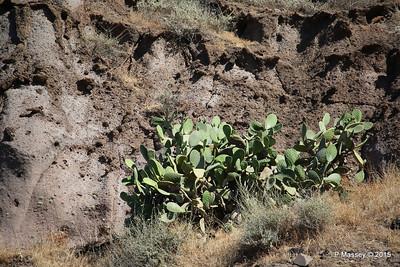 Cacti Santorini PDM 18-07-2015 07-43-09