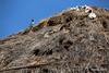 Birds Nests Mykonos Windmills PDM 03-05-2015 07-39-04