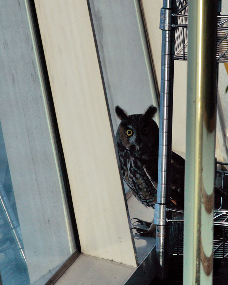 Whooo are you and what are you doing on my cruise ship? I was sitting having morning coffee, looking for whales and I caught some movement out of the corner of my eye.