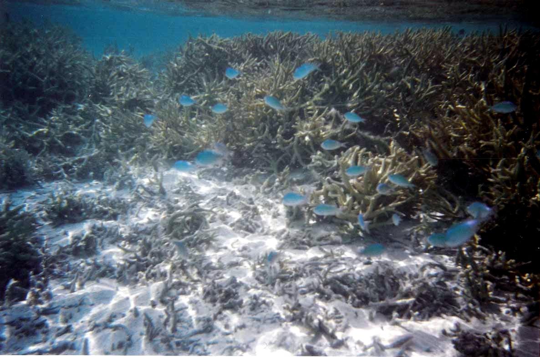 Snorkeling at Raiatea