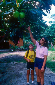 Michael and Nancy reaching for some low hanging breadfruit.