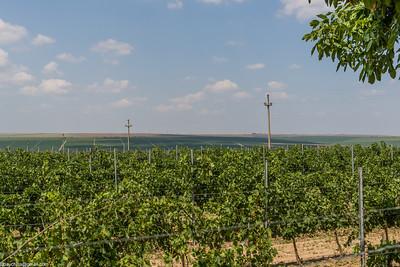 Romanian vineyards
