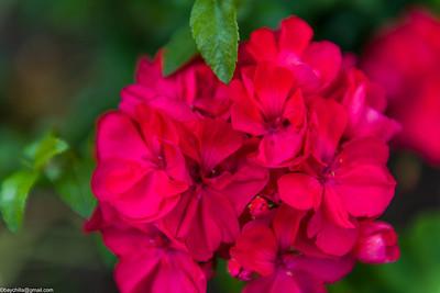 Flowers + bokeh