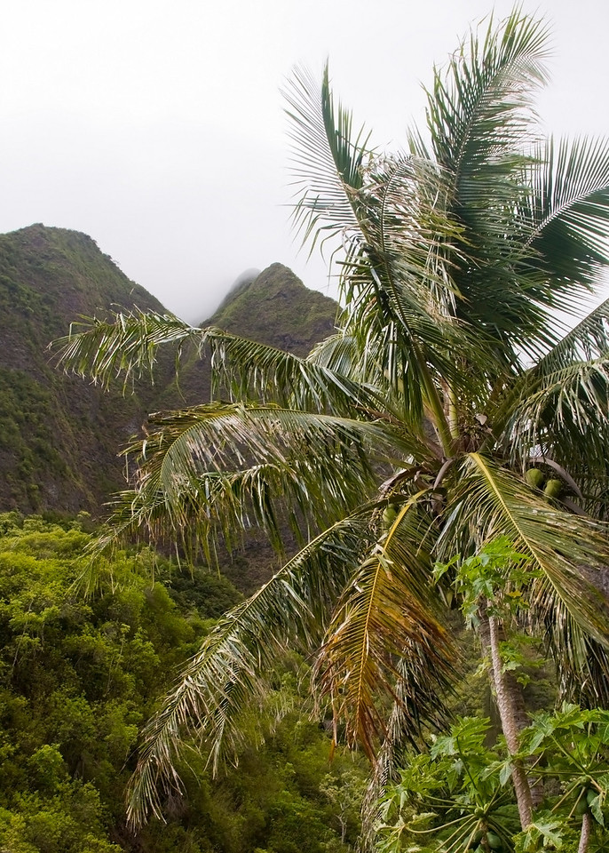 Palm Tree and Peaks in Iao Valley on Maui