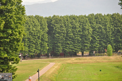 They seem to like lining the roads with these trees. (Lucca).