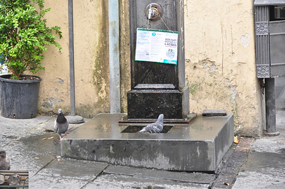 I hope that doesn't say non-potable as several people drank from it, rudely interrupting the pigeons bath (Lucca).