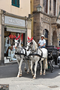 Horse drawn carriage, with the horses wearing ear plugs (Lucca)?