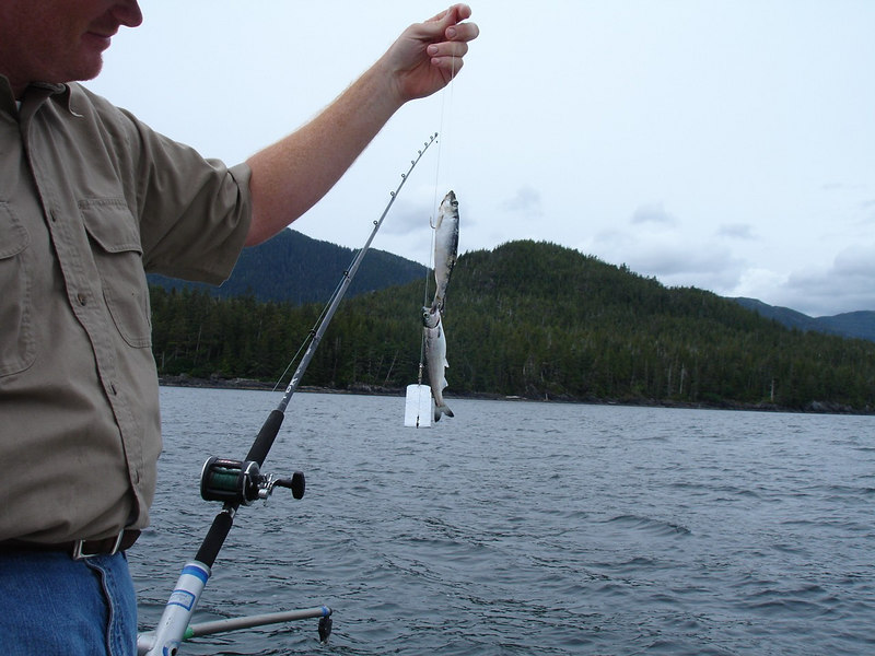 An Enormous King Salmon Caught while Fishing in Ketchikan