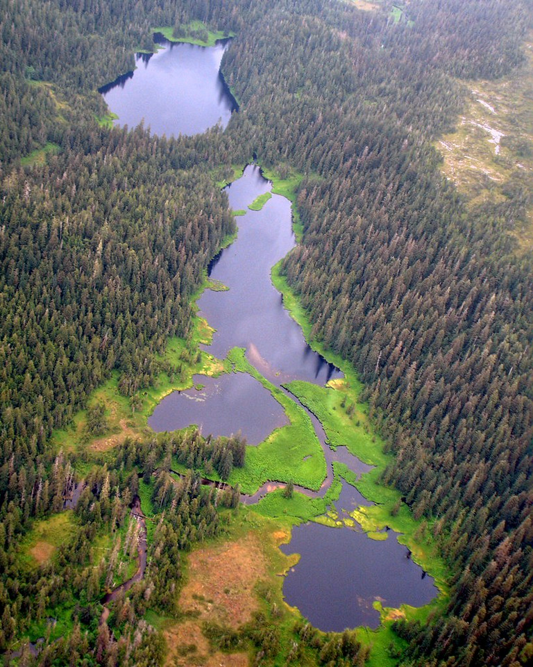 Misty Fjords Lake and Muskeg