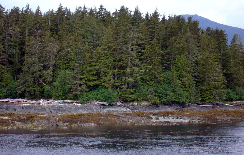 Trolling for King Salmon along a Shoreline near Ketchikan