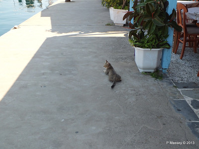 Cat at Sami Kefalonia PDM 19-06-2013 08-29-44