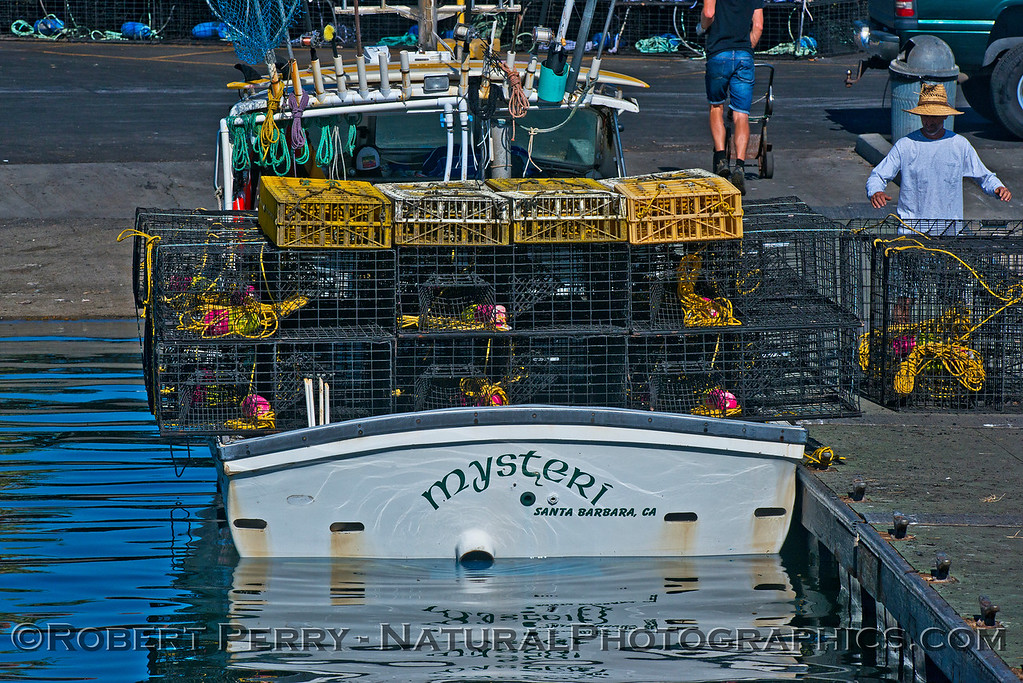 vessel Mysteri with lobster and crab traps Cancer magister &  Panulirus interruptus 2014 09-26 SB Harbor-002