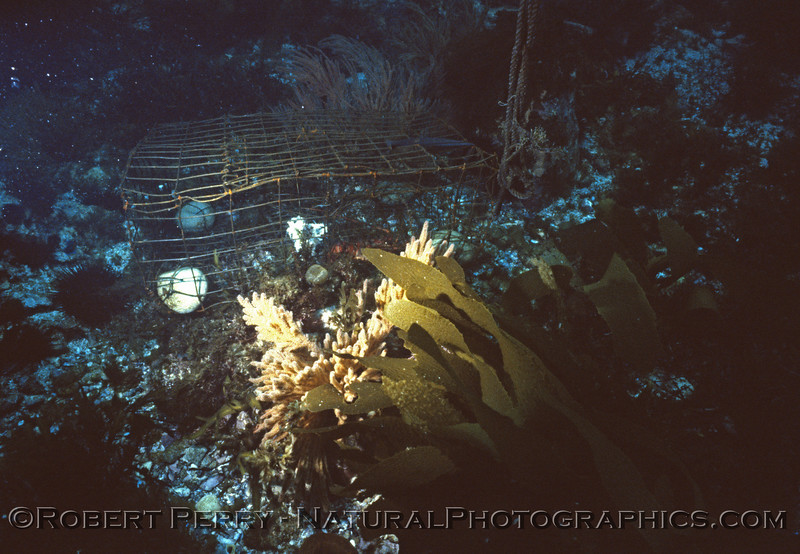 lobster trap Panulirus interruptus Log 967 1983-07 Middle Coronado Isl BC Mex