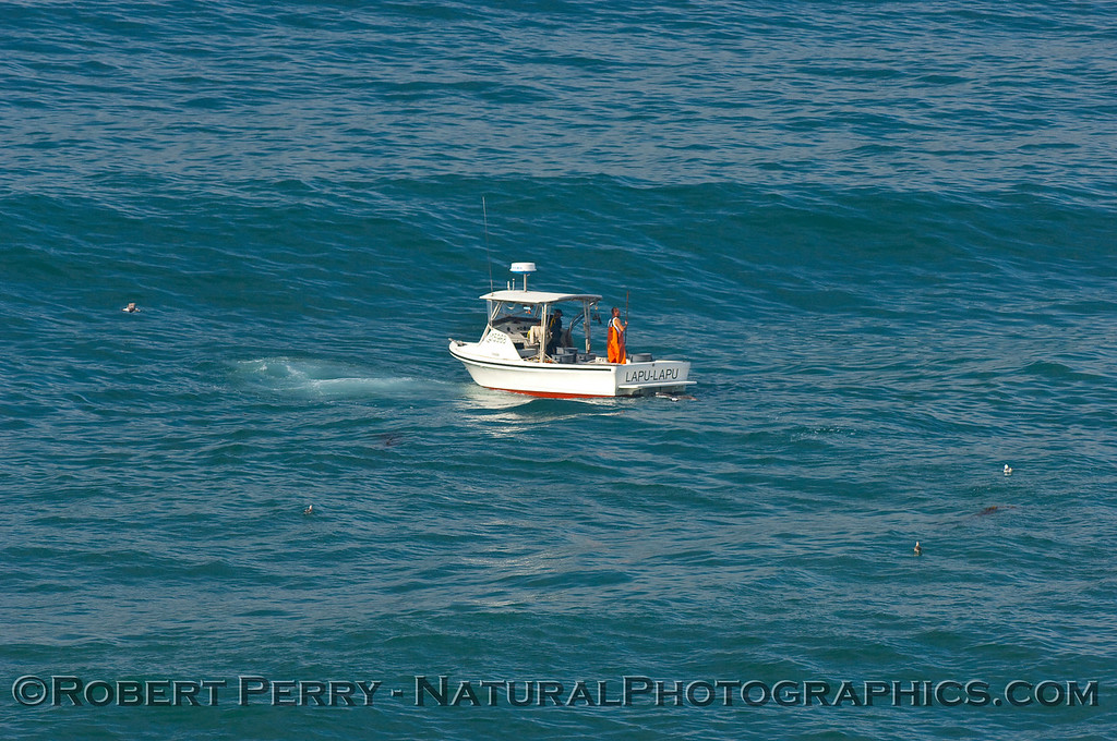 Another shallow water lobster boat (note the incoming wave).