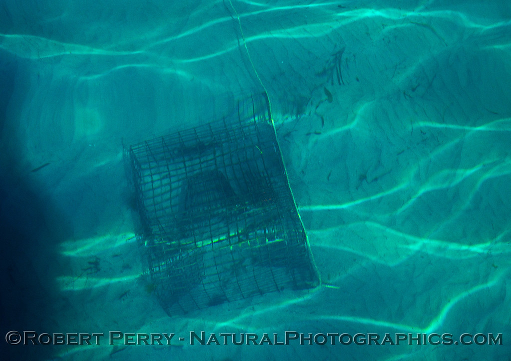 lobster trap on bottom Panulirus super clear water 2015 10-21 Mohawk Reef SB Coast-009