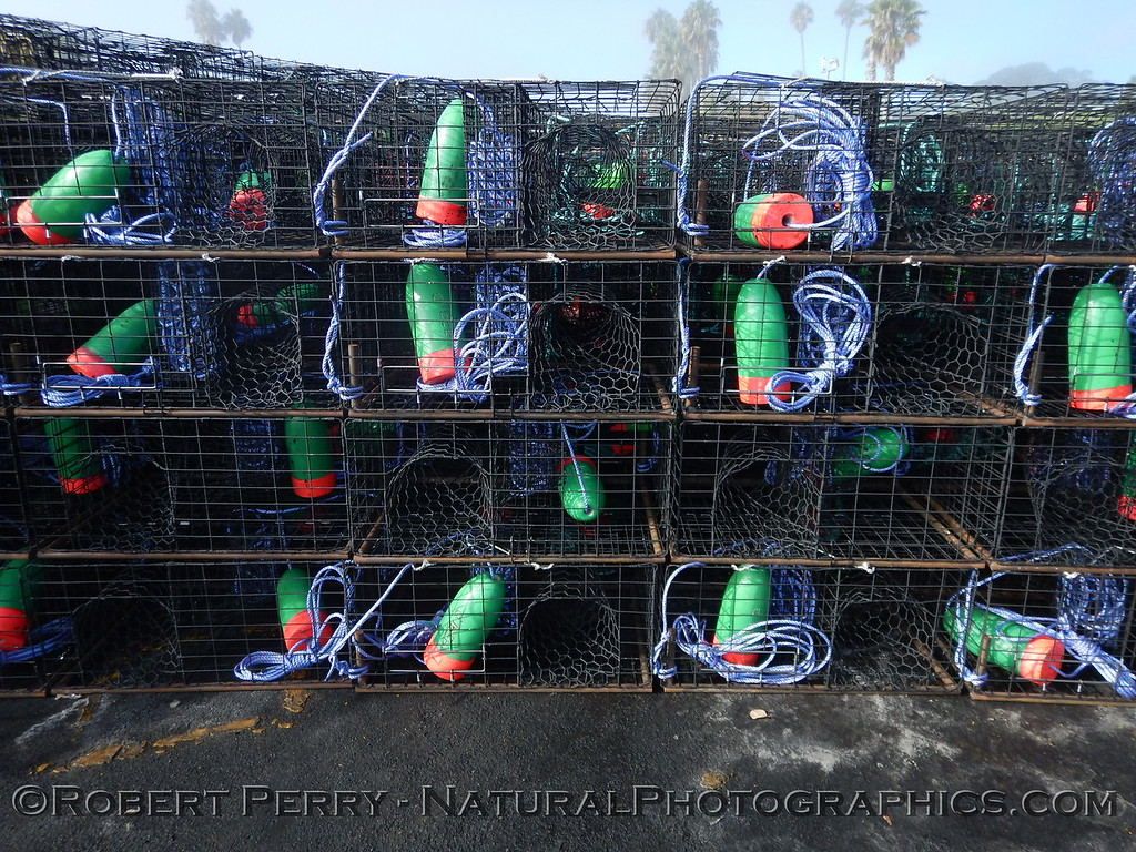 Lobster traps staging area Panulirus interruptus 2014 09-23 SB Harbor-024