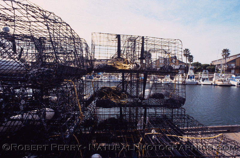 lobster traps Panulirus on dock1986-04 Ch Isl Hbr-001
