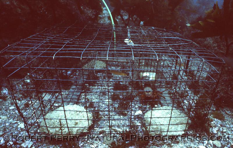 lobster trap Panulirus interruptus Log 736 1980-11 Anacapa