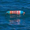surface float lobster trap Panulirus interruptus 2015 02-27 SB Coast- 162