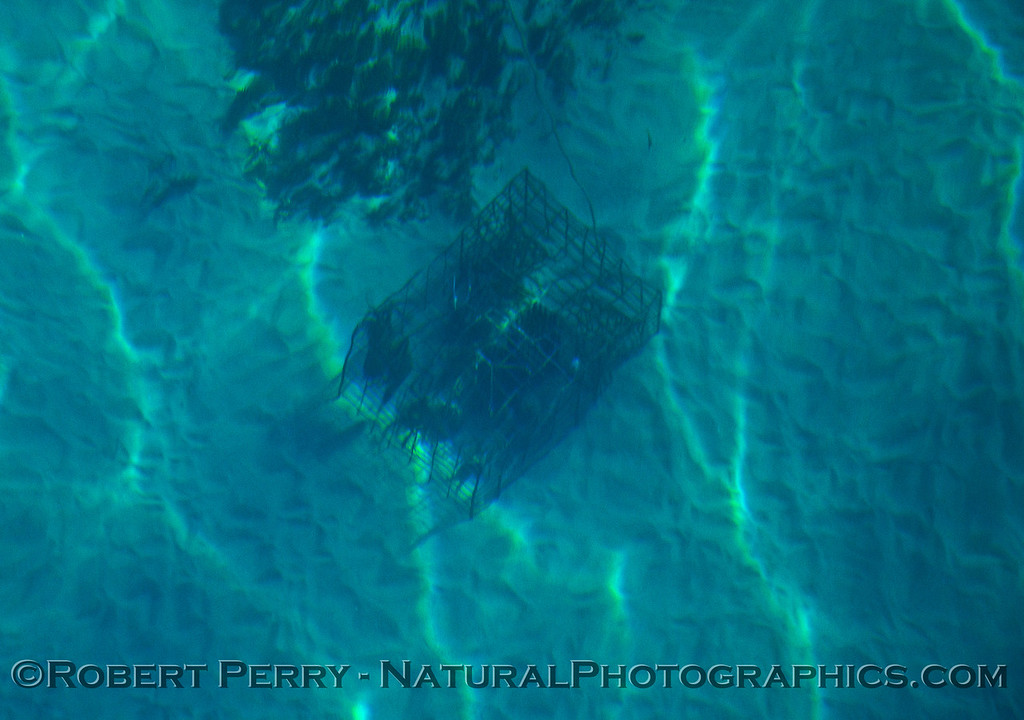 Lobster Panulirus trap on ocean floor in super clear water 2015 10-21 Mohawk Reef SB Coast-004