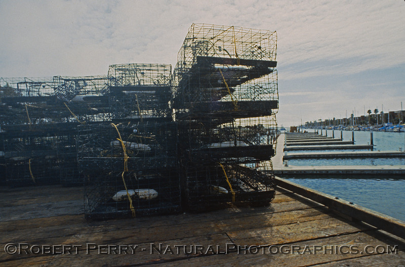 lobster traps Panulirus on dock1986-04 Ch Isl Hbr-002