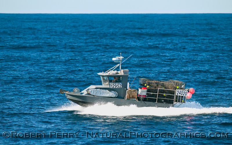 A boat load of traps heading across the Channel to Santa Cruz Island.