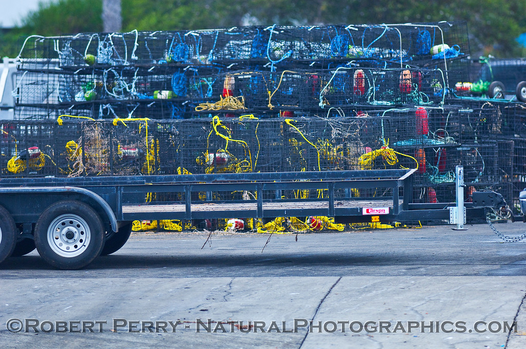 Traps being brought to the launch ramp at the start of lobster season at the beginning of October.