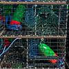 Lobster traps staging area Panulirus interruptus 2014 09-23 SB Harbor-a-073