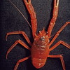 Crustaceans : 7 galleries with 272 photos