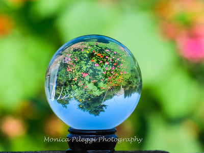 Crystal Ball Flowers 25 July 2019-5539