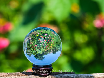 Crystal Ball Flowers 25 July 2019-5533