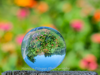 Crystal Ball Flowers 25 July 2019-5545