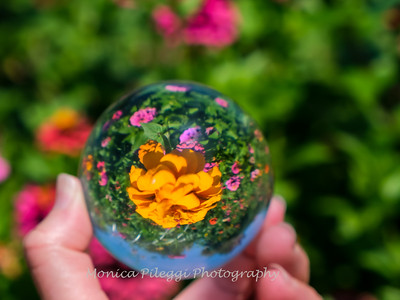 Crystal Ball Flowers 25 July 2019-5693