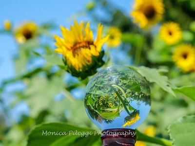 Crystal Ball Flowers 25 July 2019-5593