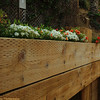 906/Andre-Colorful flowers decorated the fence constructed with wood planks.  Thought this line and curve were interesting