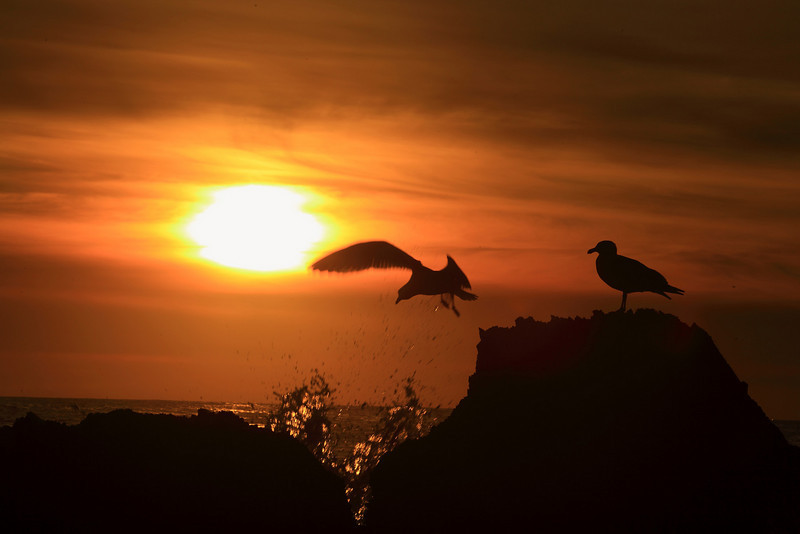 906-Andre-Two seaguls on the rock at sunset.  Caught one of the bird taking off with the splash coming.  If the marine layer was stronger, the sun could be a big orange ball, making less contrasty.  That would be a much better photograph.