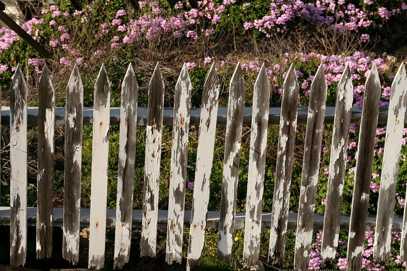 104 - Fernando Sauceda - White Fence