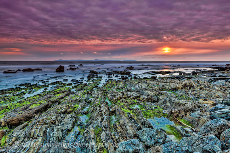 20170320_Crystal Cove SP_0683