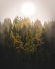 Divine Light-