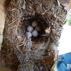 Box 8 - note snake skin - Most likely Tufted Titmouse nest/eggs