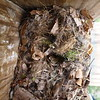 Box 5 - nest in bad shape and removed
