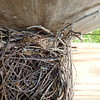 Box 5 - Parital House Wren nest