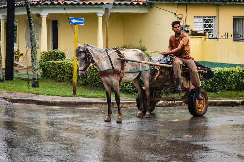 Horse and Cart, Vinales Cuba