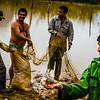 Fishermen and Fish