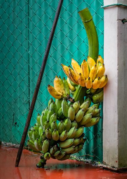 089_2016_Vinales_Cuba_-01155