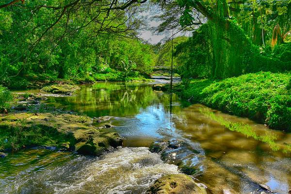 River and bridge in Bosque