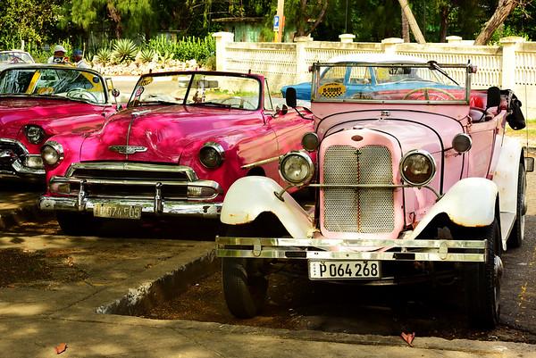 Three Pink Beauties