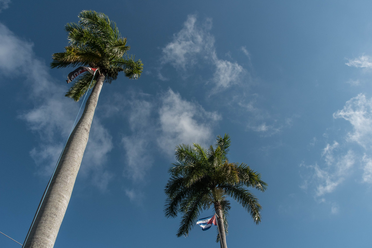 Cuban flags hanging in palm trees in front of PCC
